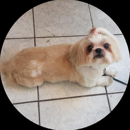 Hundesalon Augenpflege