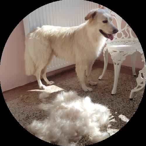 Hundefriseur Carding